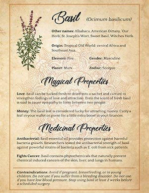Basil Printable Herbal Witchcraft