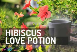 Hibiscus Self-Love Potion Spell