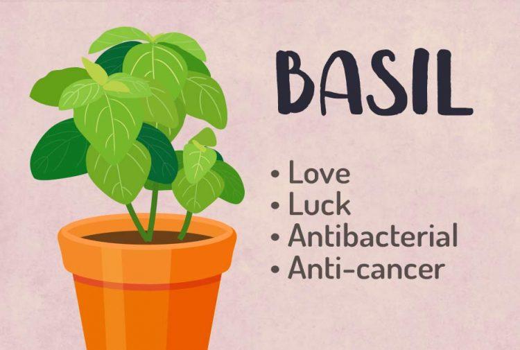 Basil Magical Properties
