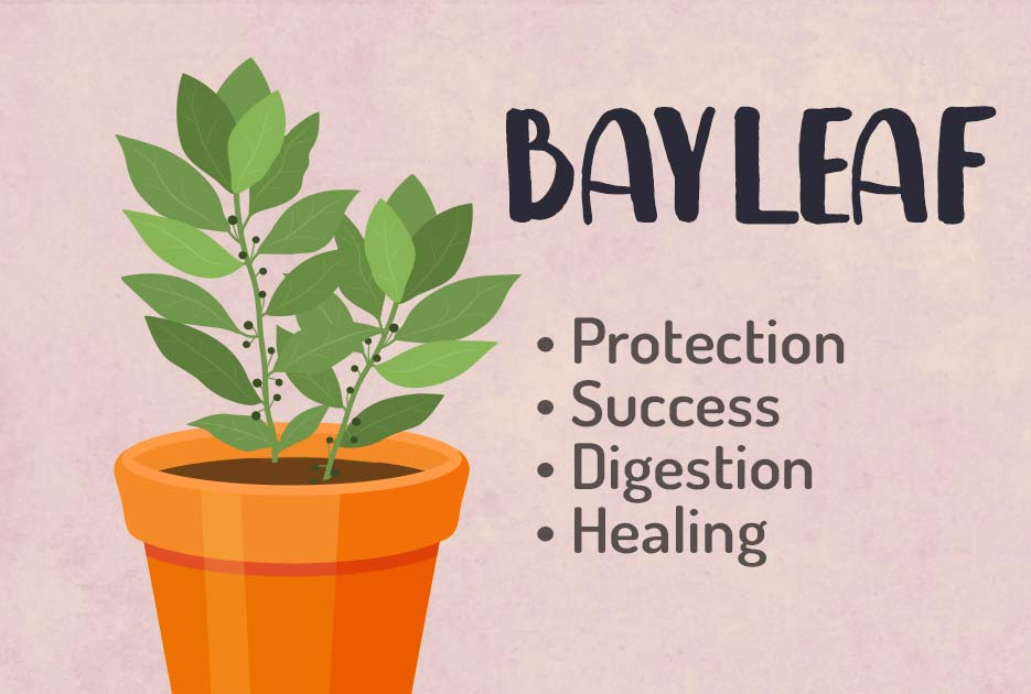 Bay Leaf Magic Properties