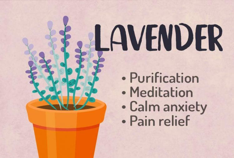 Lavender Herbal Witchcraft Magic Course