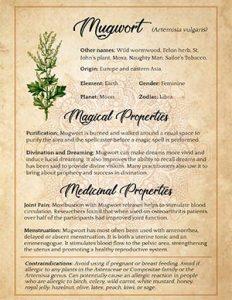 Mugwort Herbal Witchcraft