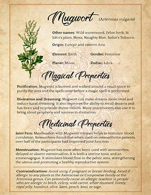 Mugwort Herbal Witchcraft