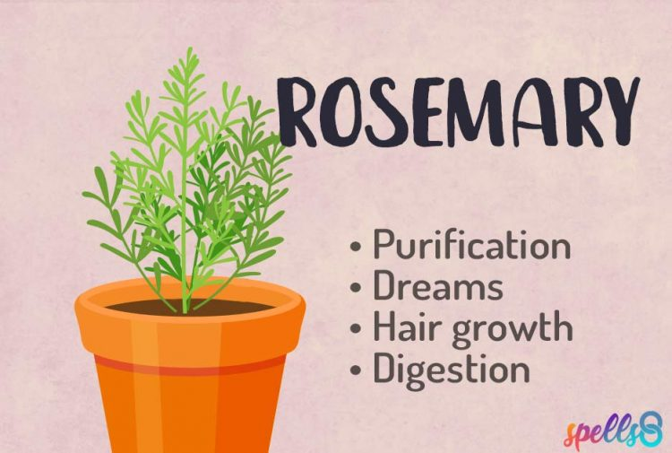 Rosemary Herbal Witchcraft Course