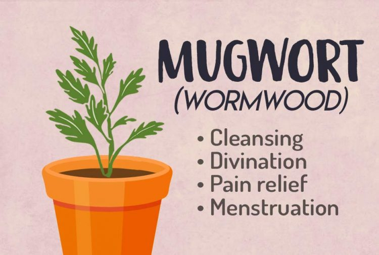Wormwood-Herb Green Witchcraft Magic