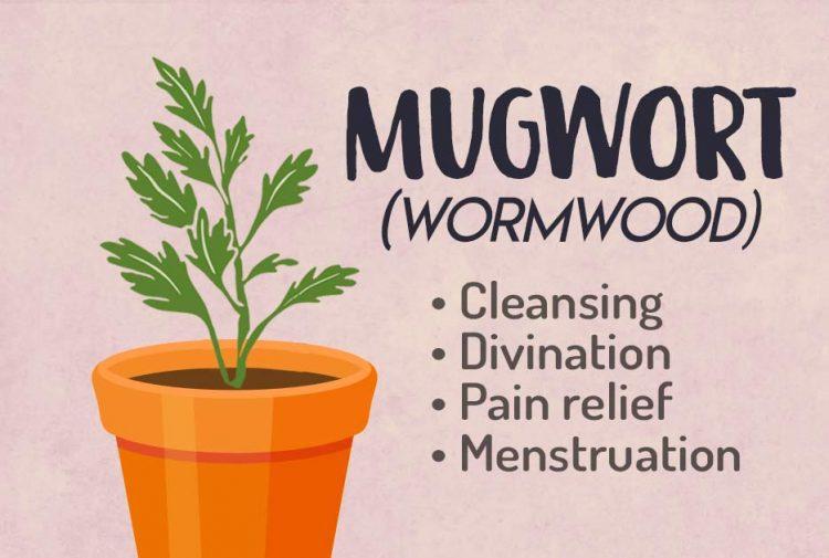 Wormwood-Herb Green Witchcraft Magic