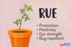 Rue Magical Properties
