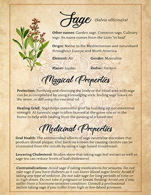 Sage herb wiccan printable page
