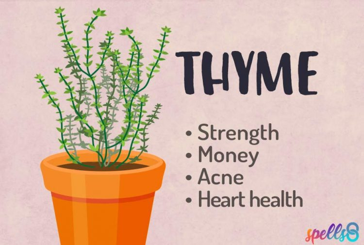 Thyme Magical Uses