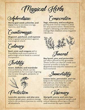 Printable Magical Herbs Green Witchcraft Poster
