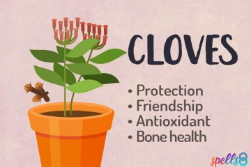 Cloves Magical Properties Green Witch