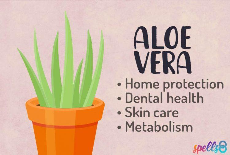 Spiritual Usage of Aloe Vera