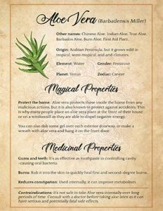 Sage Witchcraft Uses