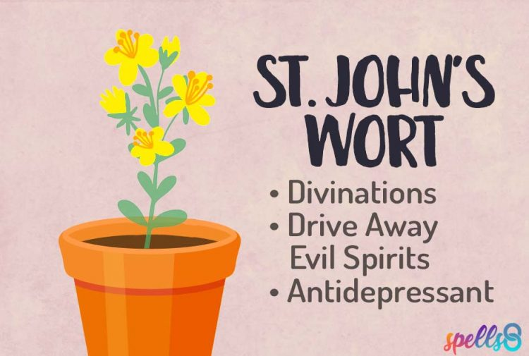 St John's Wort Magical Uses Green Witch