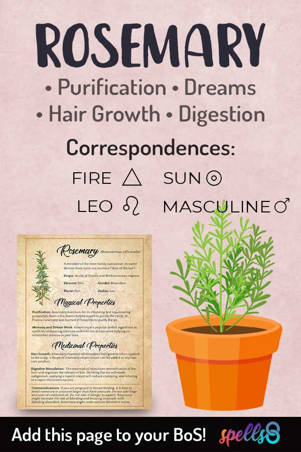 Elemental Correspondences Of Rosemary
