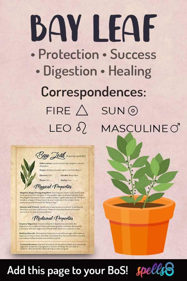 Astrological Correspondences Of Bay Leaf