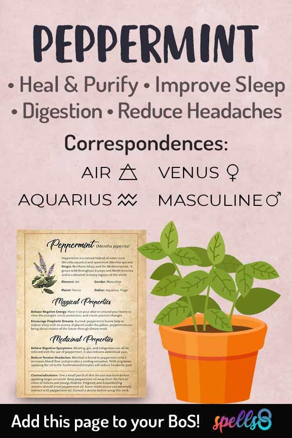 Correspondences of Peppermint