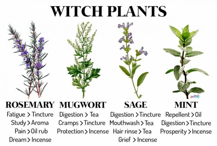 Witch Plants & Herbs Every Witch Should Know