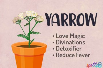 Yarrow Witch Uses