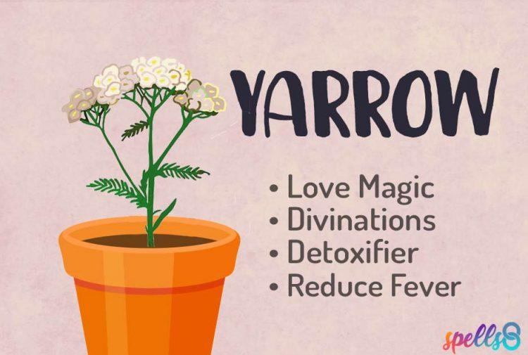 Yarrow Witch Uses
