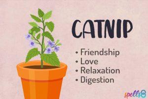 Magical properties of Catnip