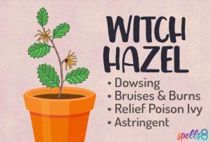 Witch Hazel Magickal Properties Grimoire