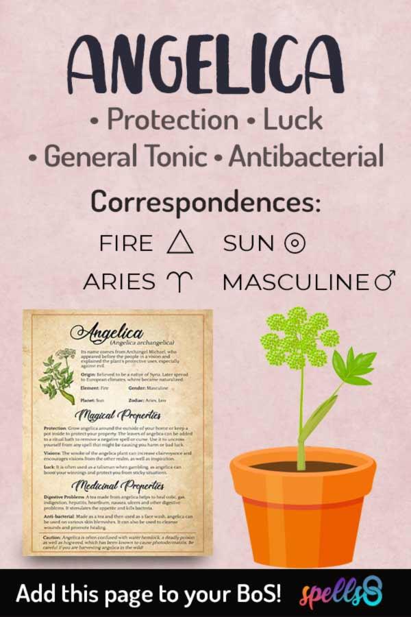 Astrological correspondences of Angelica
