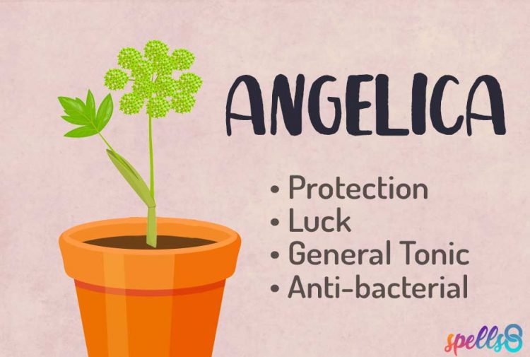 Angelica Witch Uses