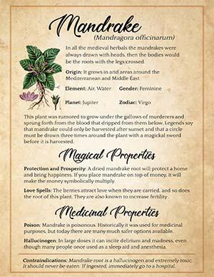 Mandrake Witchcraft Uses