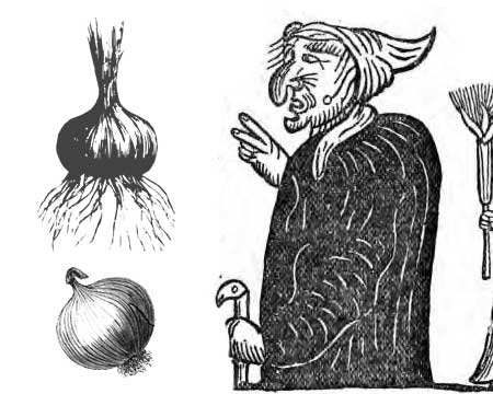 Divination with onions