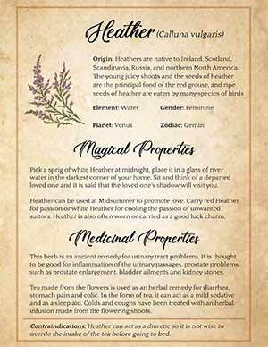 Heather Magickal and Medicinal Uses