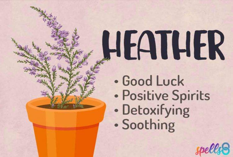 Spiritual Uses of Heather